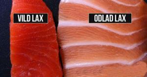 Odlad Lax – Hur hälsoskadlig är den egentligen?